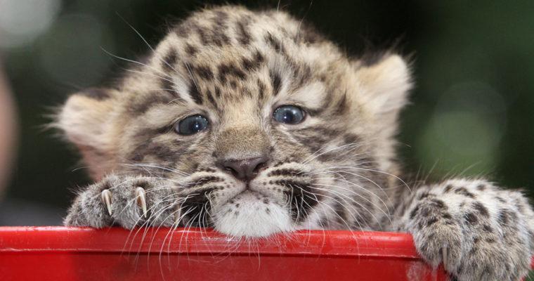 Com que animal me identifico mais?