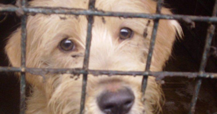 Instituições que ajudam animais