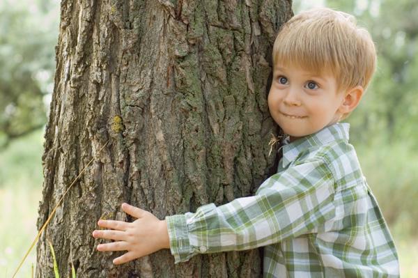 Abraçar uma árvore por dia