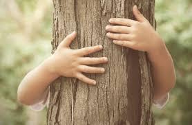 Os nomes das árvores